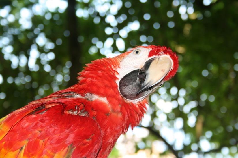 parrot-1070624_1920